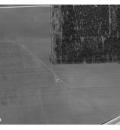 Solsikken 1960